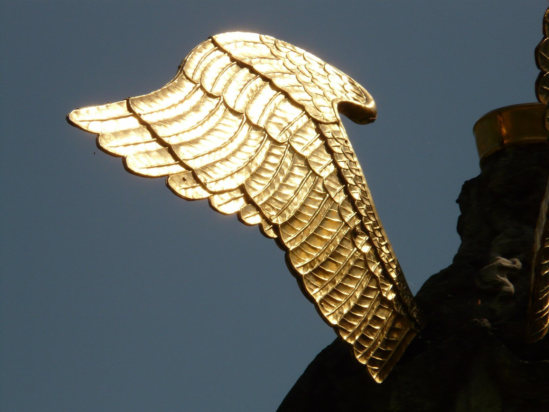wing-3354_1920